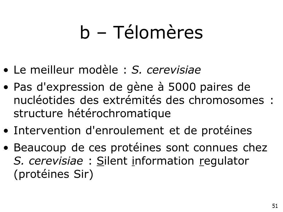 b – Télomères p224#6 Le meilleur modèle : S. cerevisiae