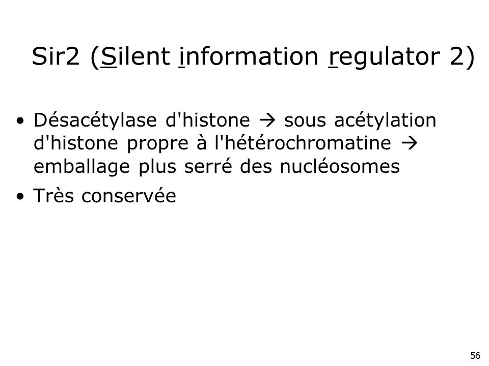 Sir2 (Silent information regulator 2)
