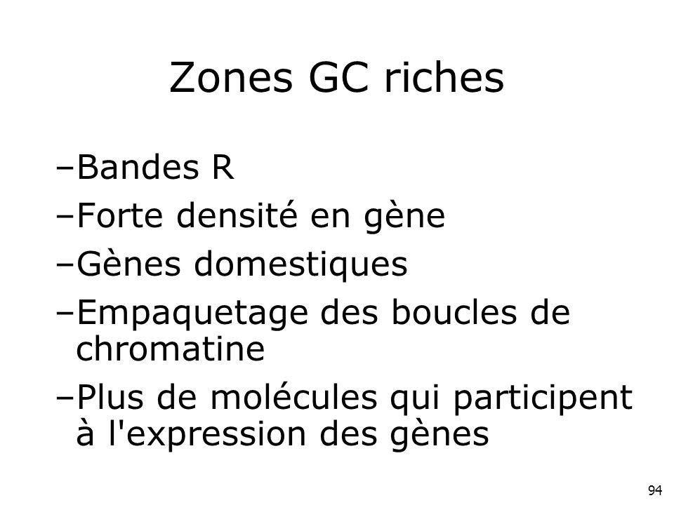Zones GC riches Bandes R Forte densité en gène Gènes domestiques