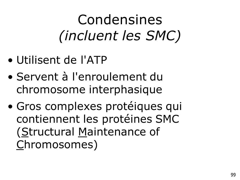 Condensines (incluent les SMC)