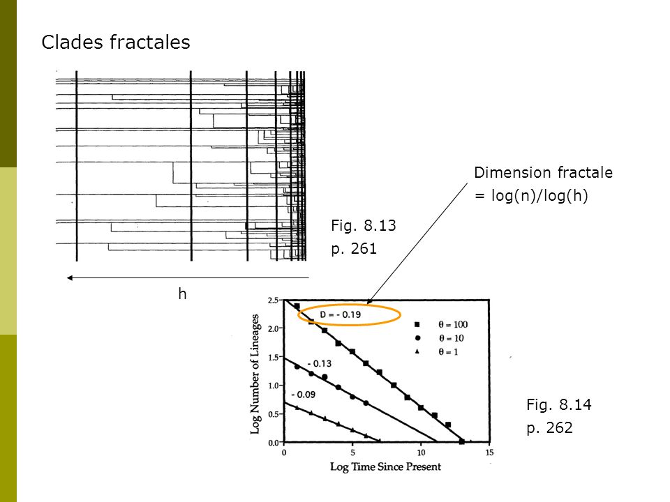 Clades fractales Dimension fractale = log(n)/log(h) Fig. 8.13 p. 261 h