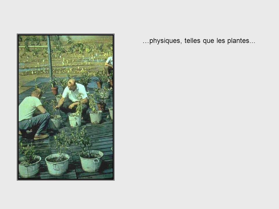 …physiques, telles que les plantes...