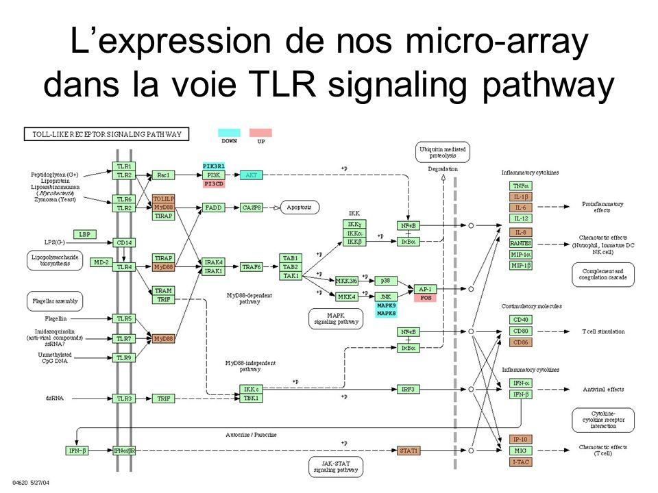 L'expression de nos micro-array dans la voie TLR signaling pathway