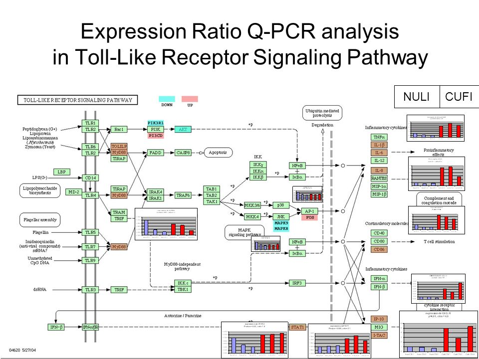 Expression Ratio Q-PCR analysis in Toll-Like Receptor Signaling Pathway