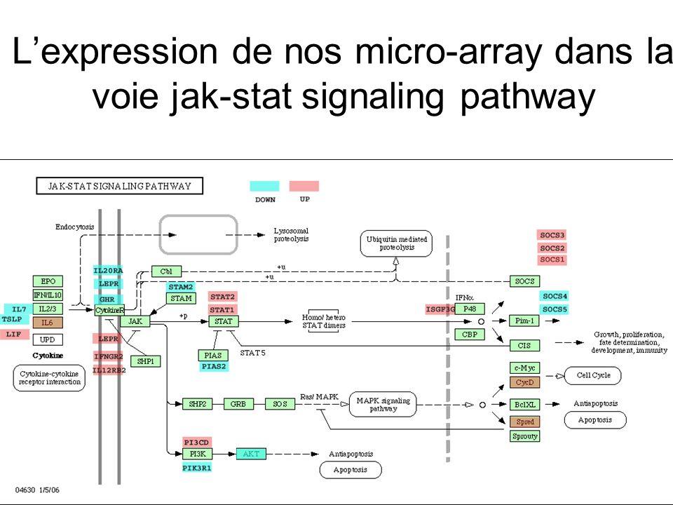L'expression de nos micro-array dans la voie jak-stat signaling pathway