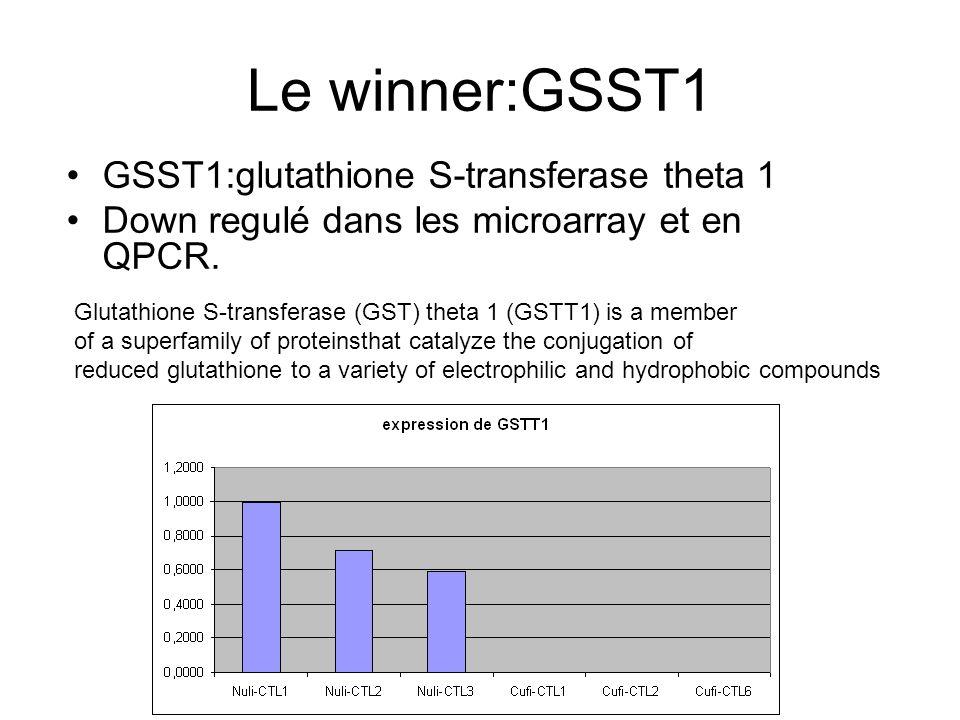 Le winner:GSST1 GSST1:glutathione S-transferase theta 1