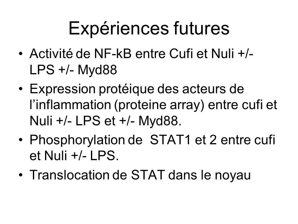 Expériences futures Activité de NF-kB entre Cufi et Nuli +/- LPS +/- Myd88.
