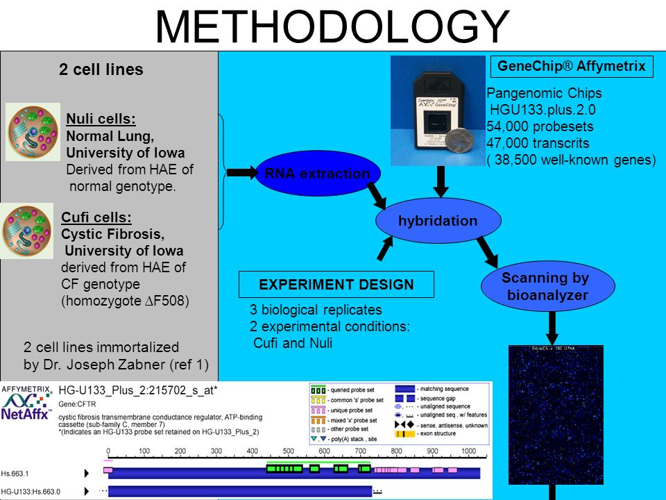 METHODOLOGY 2 cell lines Nuli cells: RNA extraction hybridation