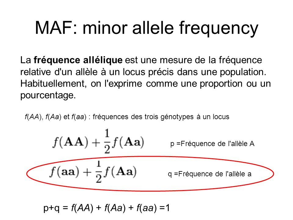 MAF: minor allele frequency
