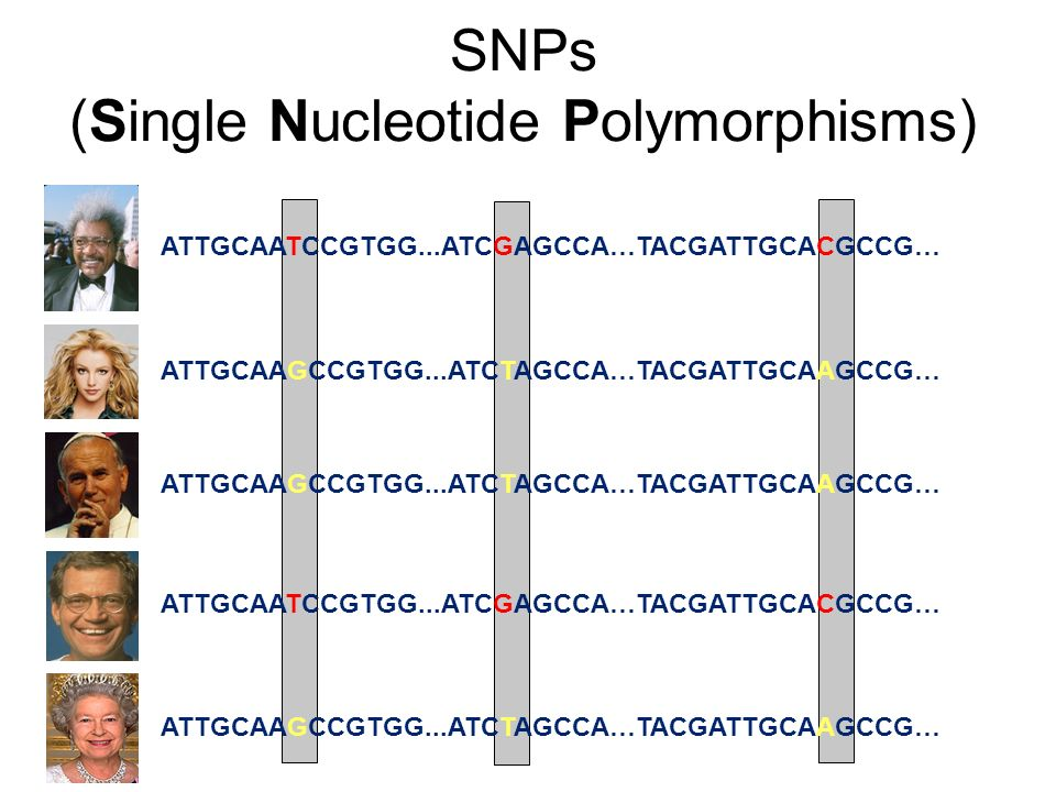 SNPs (Single Nucleotide Polymorphisms)