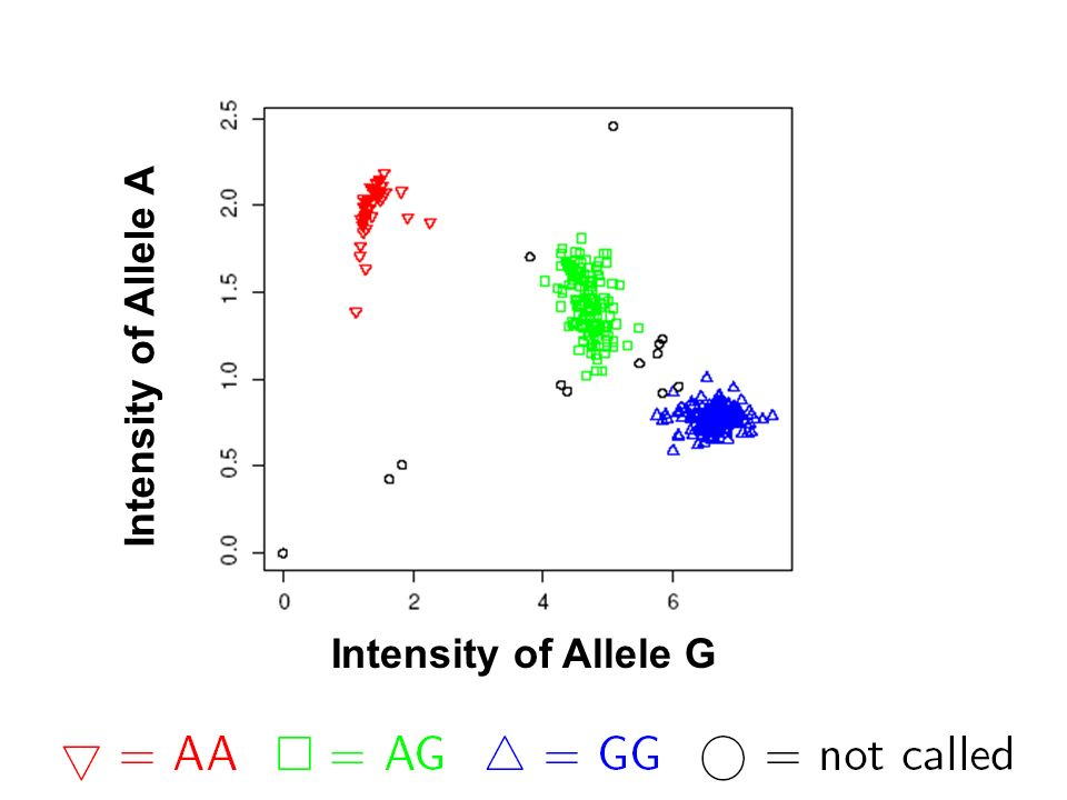 Intensity of Allele A Intensity of Allele G