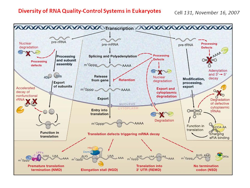 Diversity of RNA Quality-Control Systems in Eukaryotes