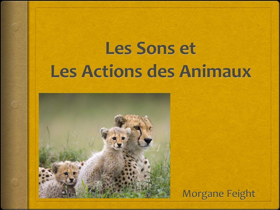 Les Sons et Les Actions des Animaux
