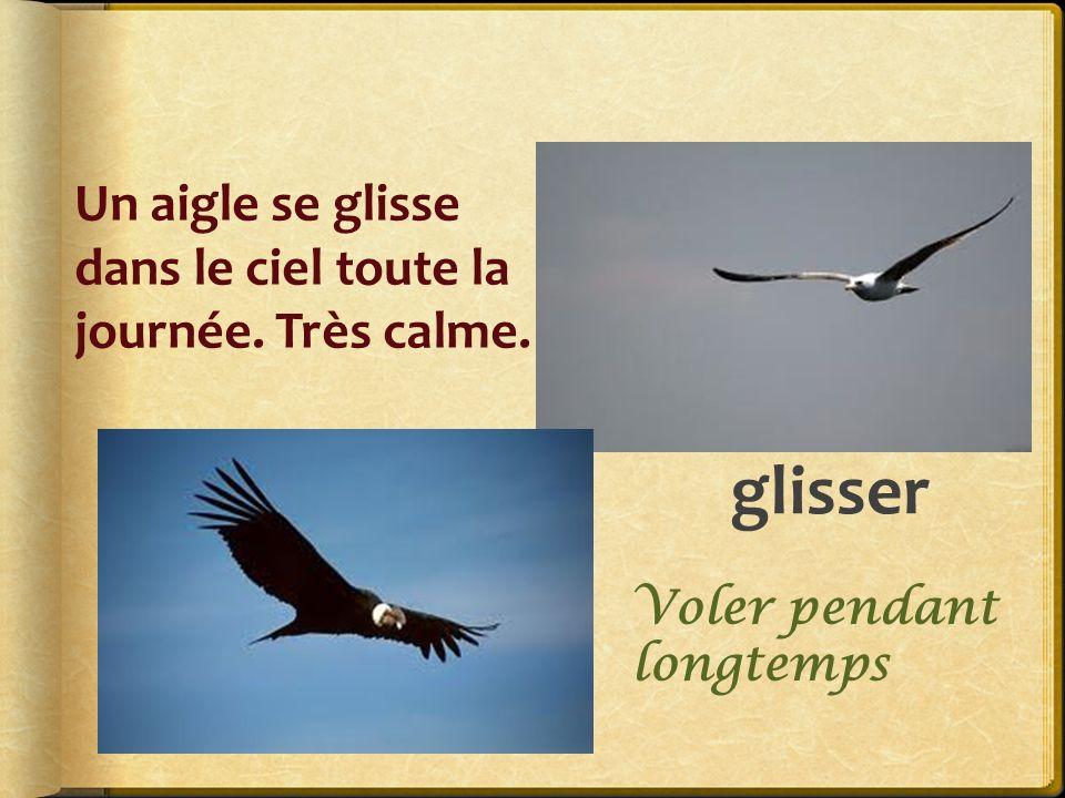 glisser Un aigle se glisse dans le ciel toute la journée. Très calme.