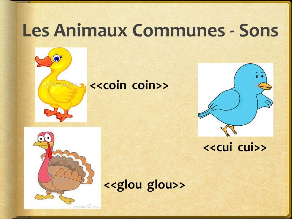 Les Animaux Communes - Sons