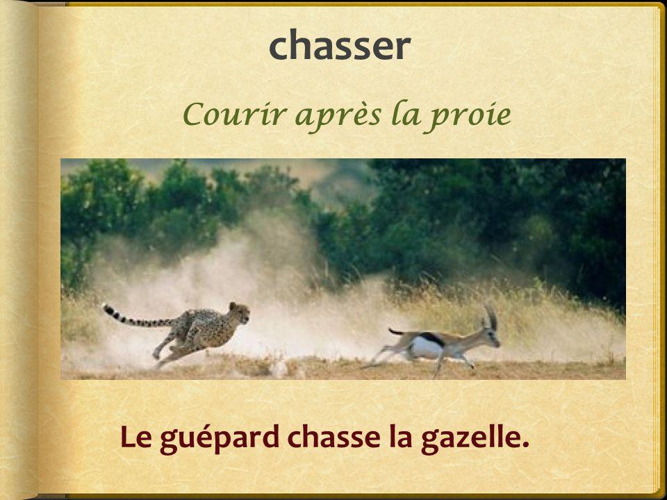 chasser Courir après la proie Le guépard chasse la gazelle.