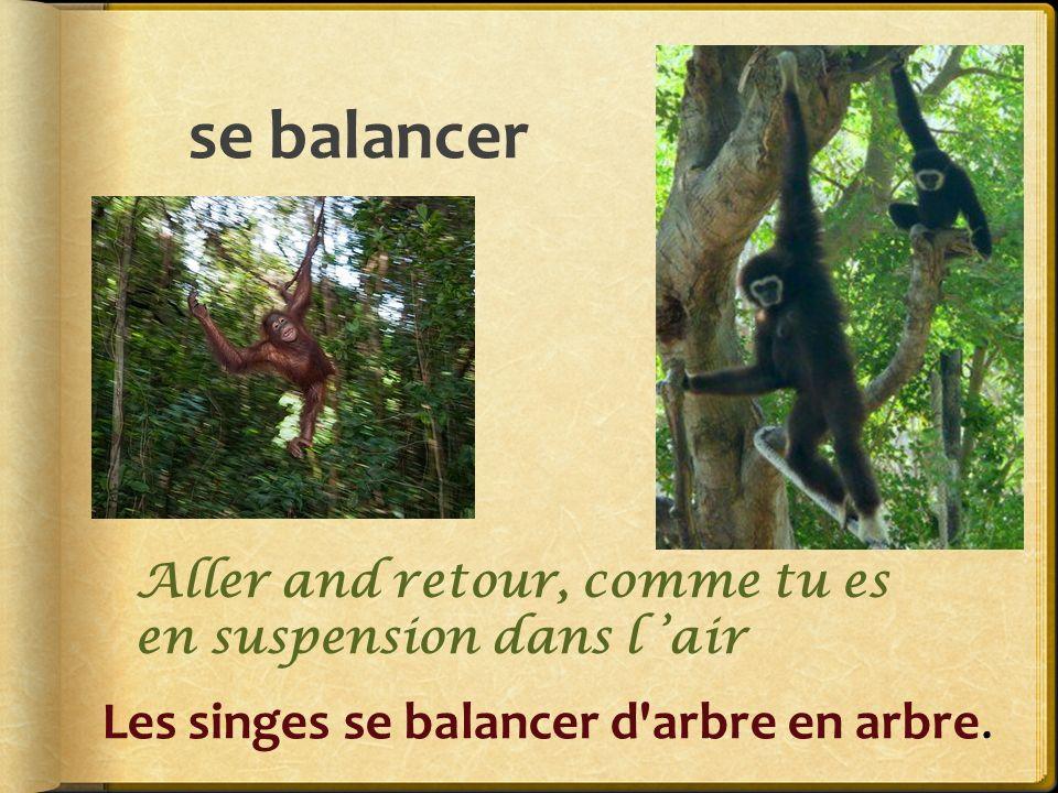 se balancer Les singes se balancer d arbre en arbre.