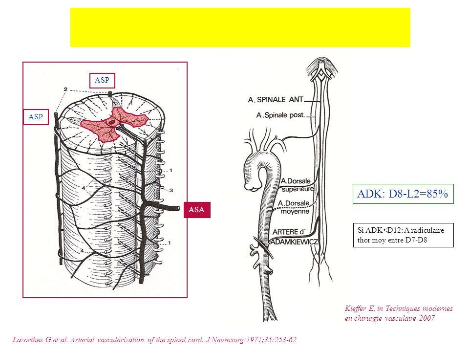 Vascularisation médullaire