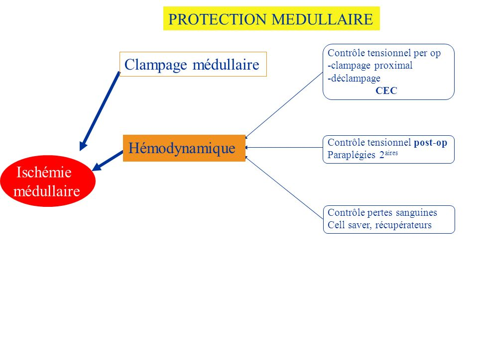 PROTECTION MEDULLAIRE