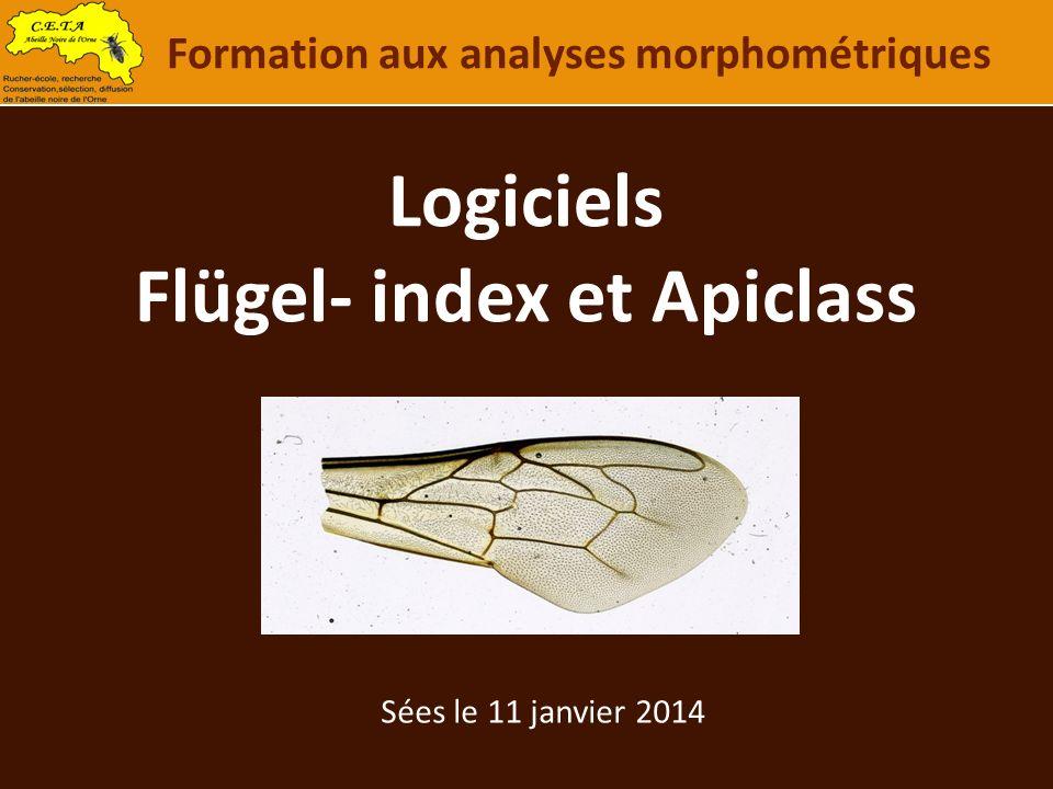Logiciels Flügel- index et Apiclass