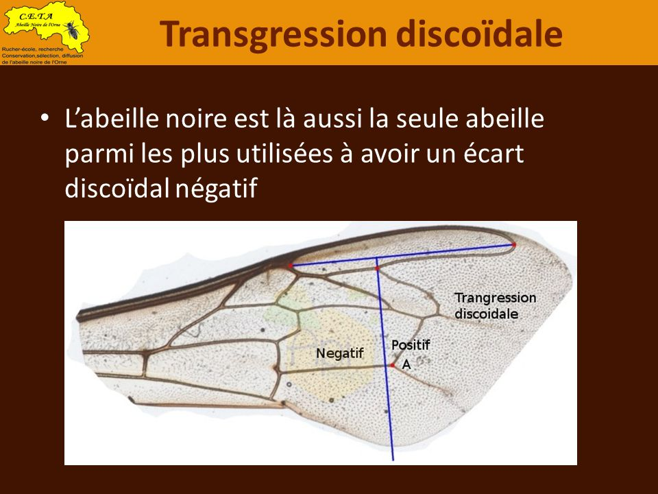 Transgression discoïdale