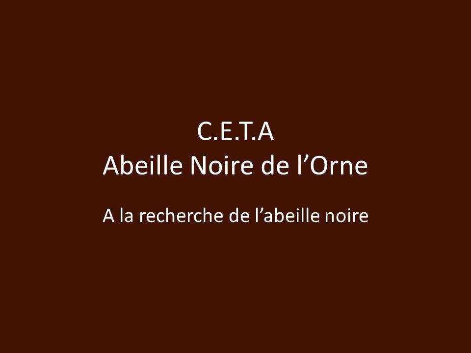 C.E.T.A Abeille Noire de l'Orne