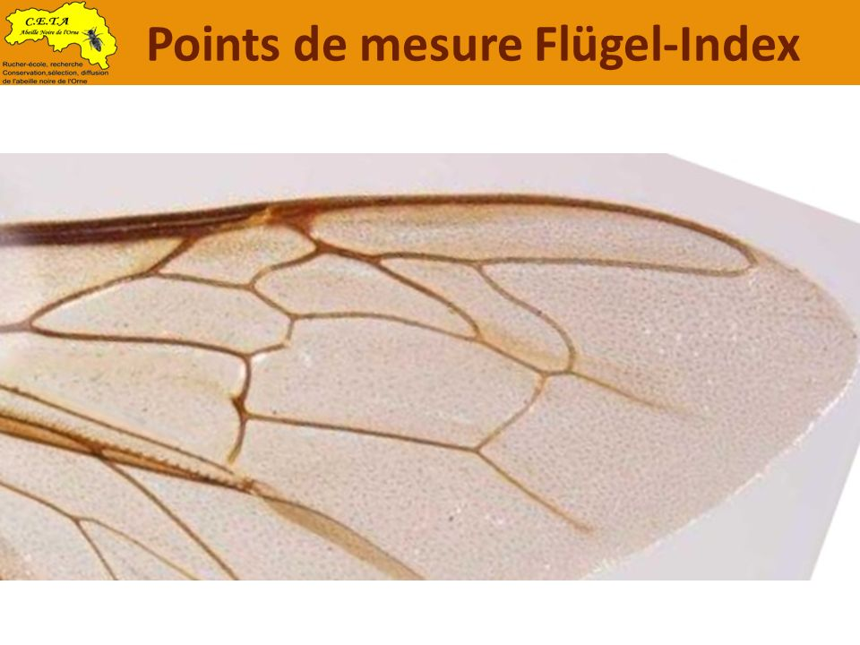 Points de mesure Flügel-Index