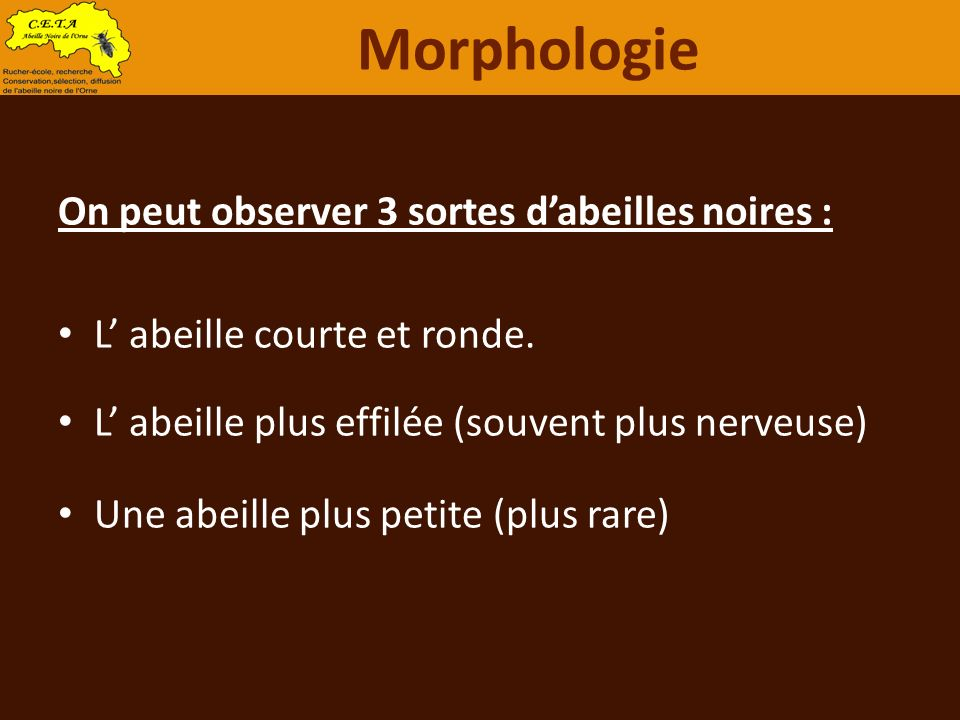 Morphologie On peut observer 3 sortes d'abeilles noires :