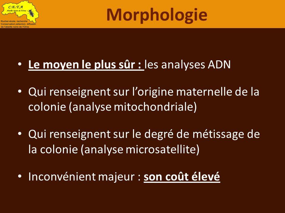 Morphologie Le moyen le plus sûr : les analyses ADN
