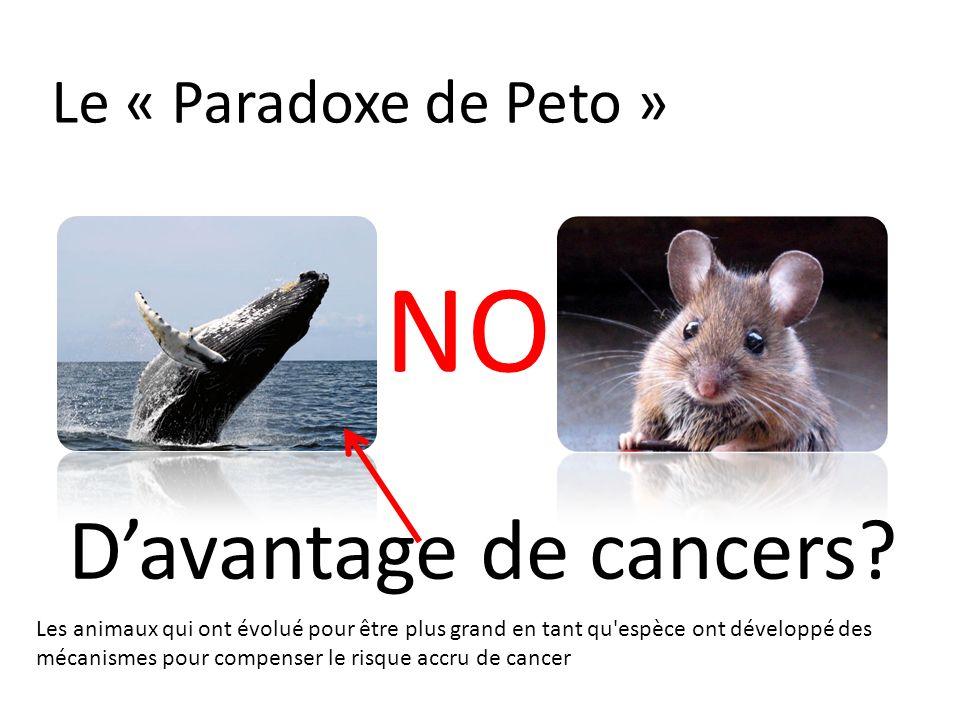 NO D'avantage de cancers Le « Paradoxe de Peto »