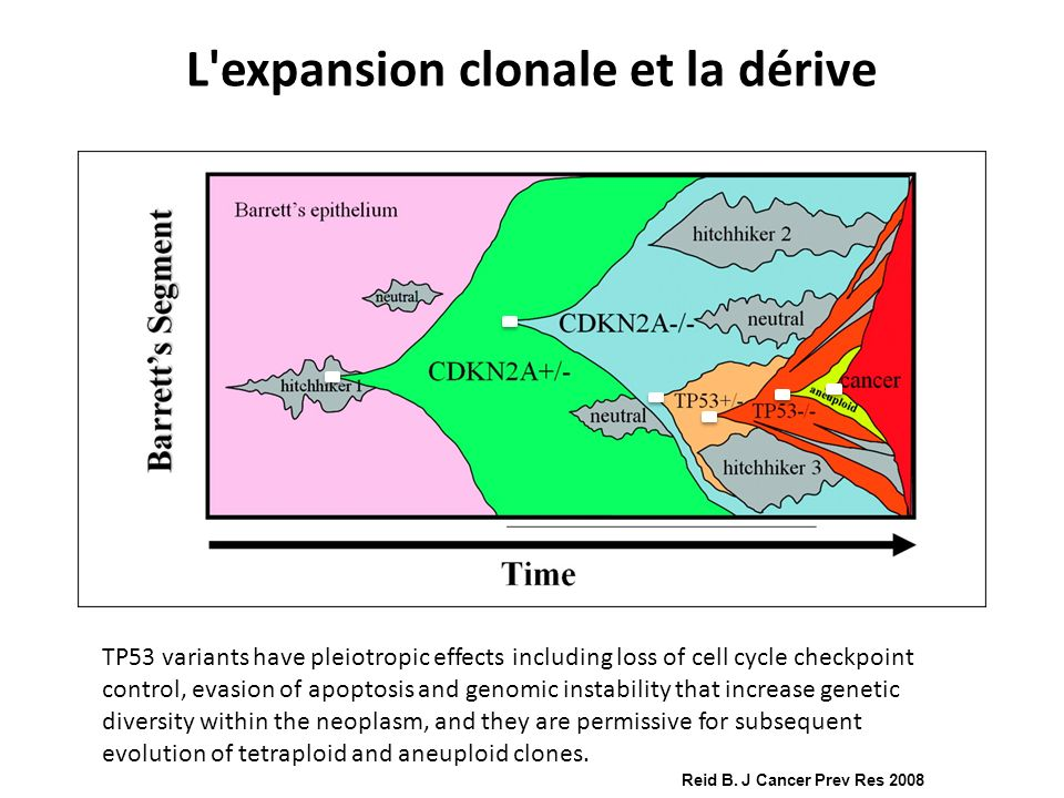 L expansion clonale et la dérive