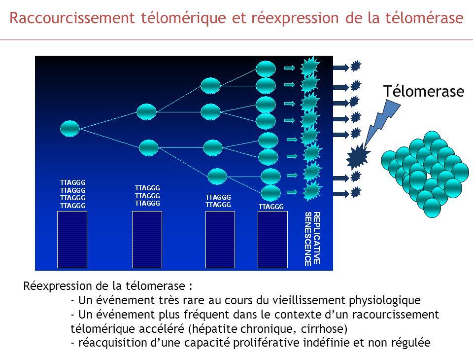 Raccourcissement télomérique et réexpression de la télomérase