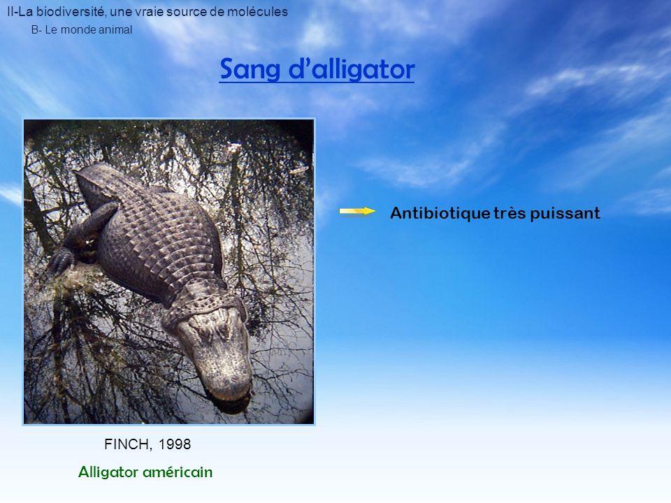 Sang d'alligator Antibiotique très puissant Alligator américain