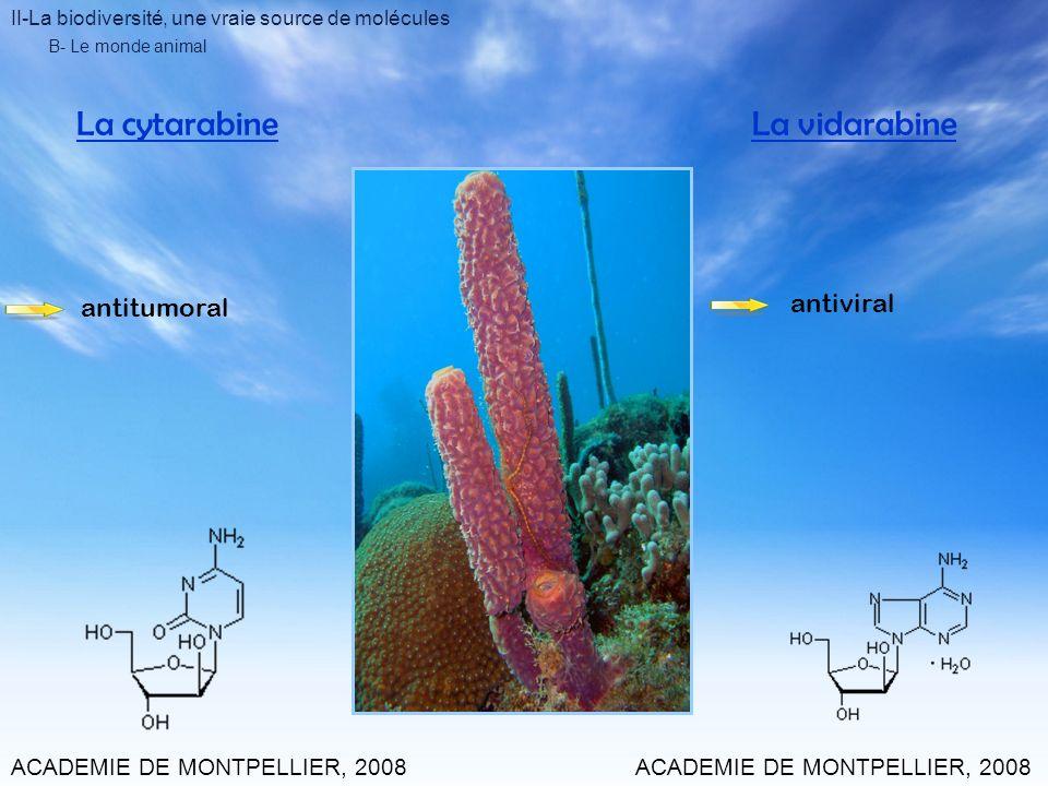 La cytarabine La vidarabine antiviral antitumoral