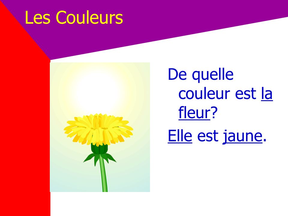 Les Couleurs De quelle couleur est la fleur Elle est jaune.