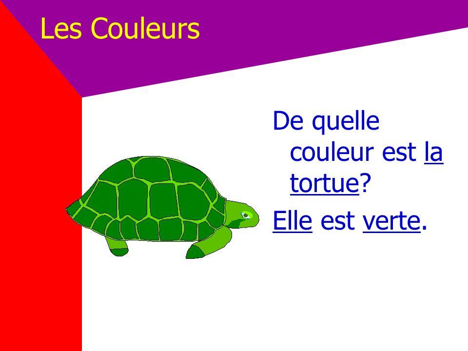 Les Couleurs De quelle couleur est la tortue Elle est verte.