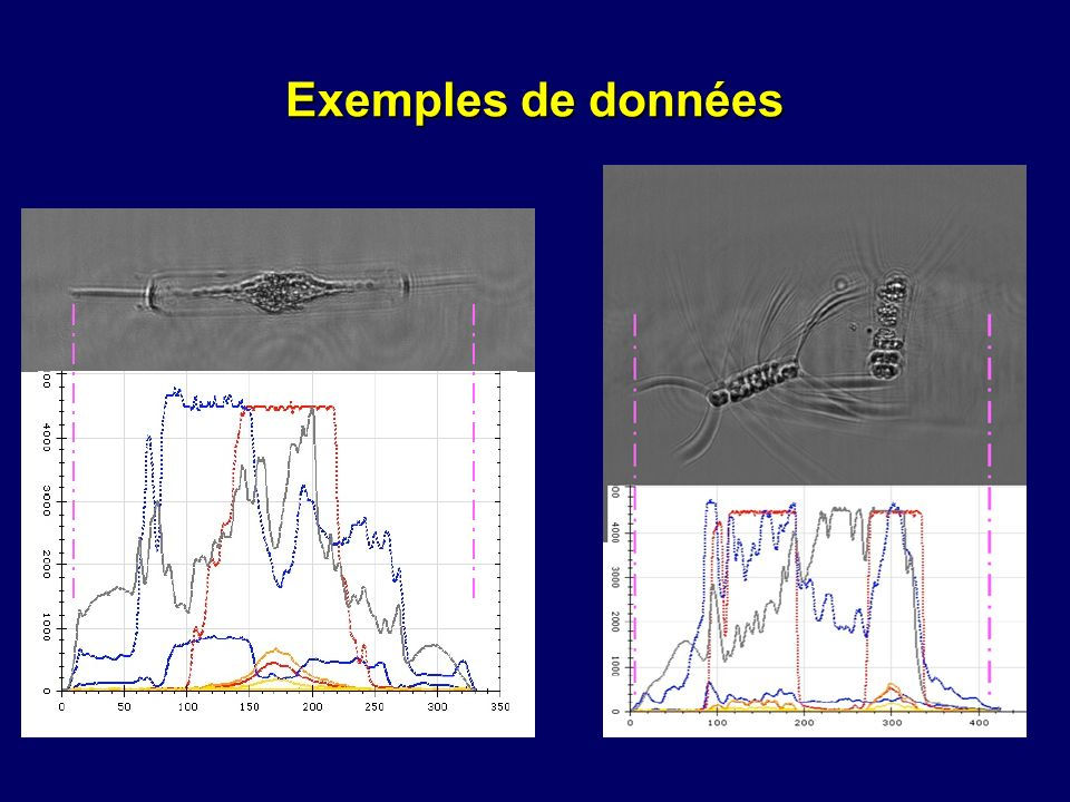 Exemples de données