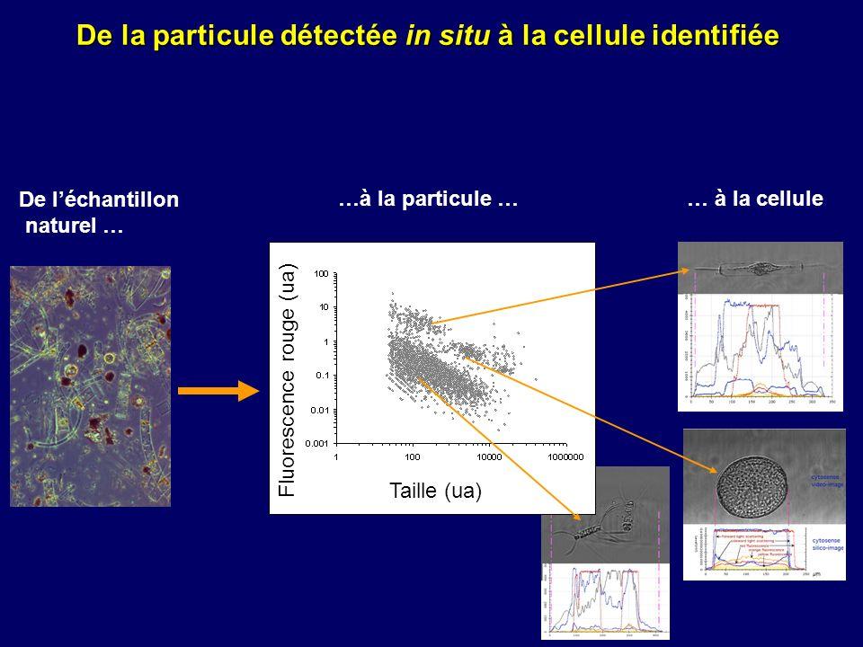De la particule détectée in situ à la cellule identifiée