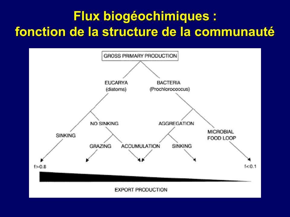 Flux biogéochimiques : fonction de la structure de la communauté