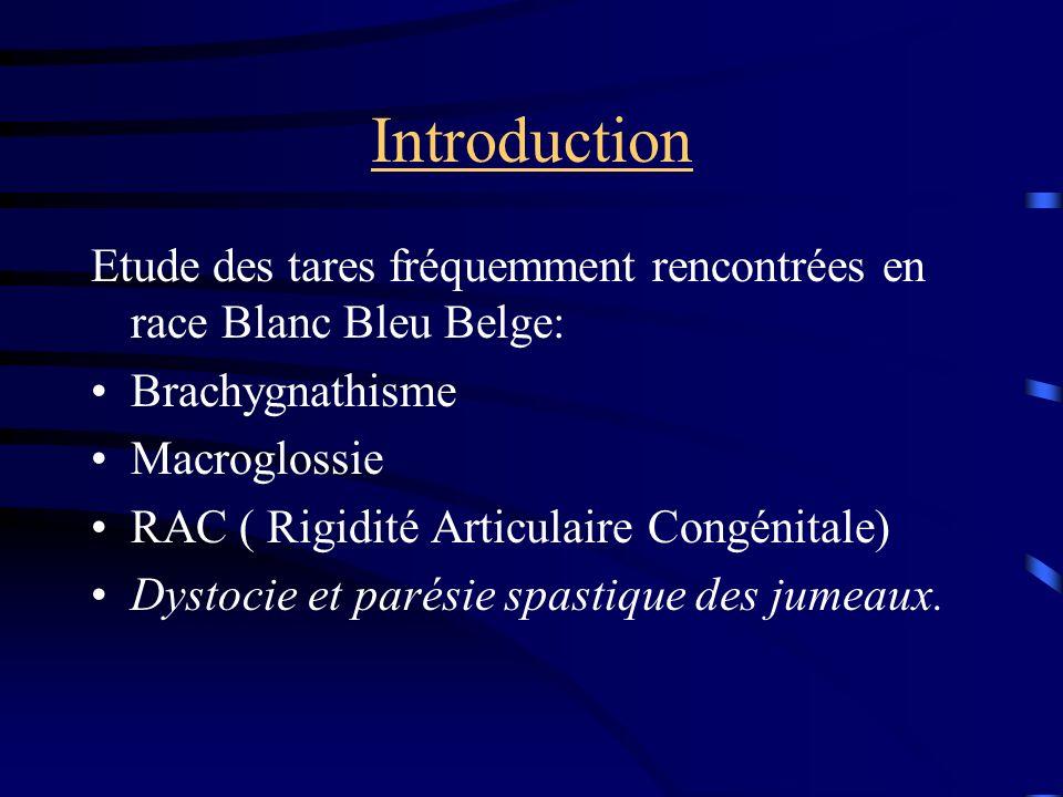 Introduction Etude des tares fréquemment rencontrées en race Blanc Bleu Belge: Brachygnathisme. Macroglossie.