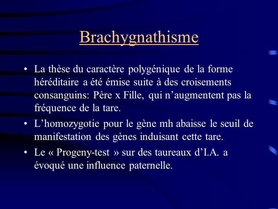 Brachygnathisme