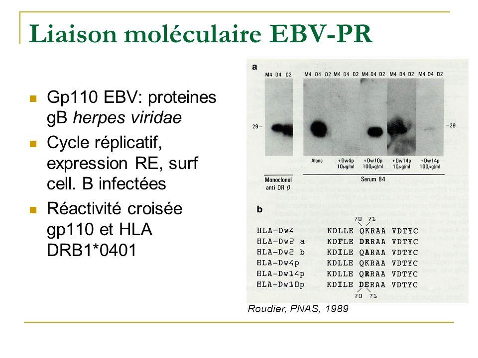 Liaison moléculaire EBV-PR