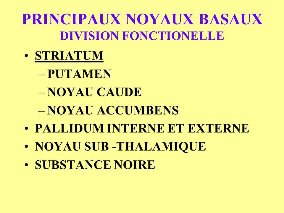 PRINCIPAUX NOYAUX BASAUX DIVISION FONCTIONELLE