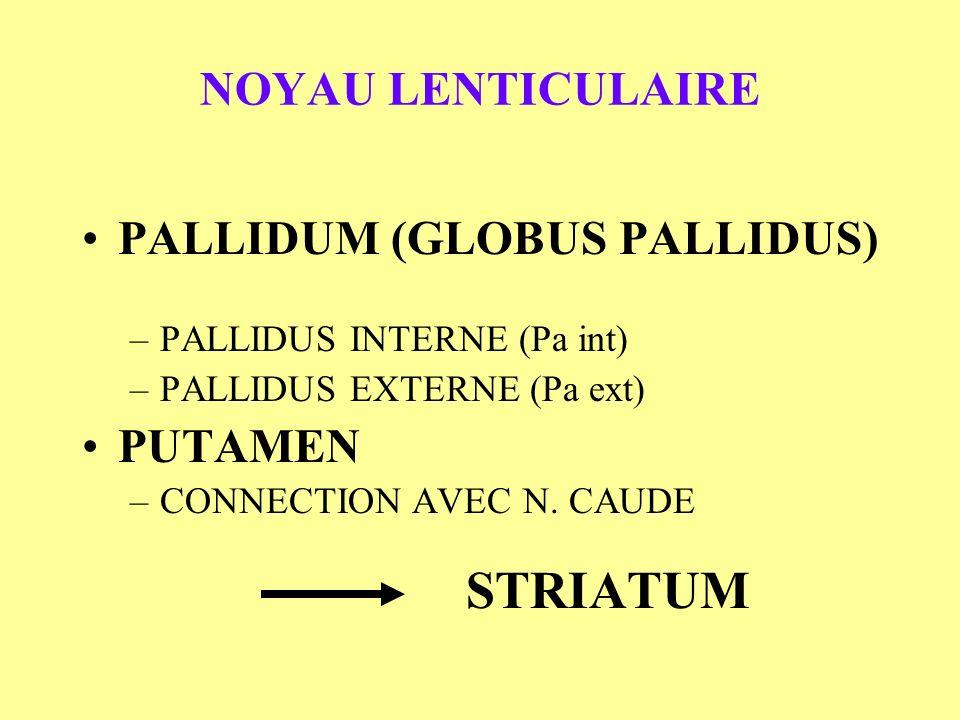 PALLIDUM (GLOBUS PALLIDUS)