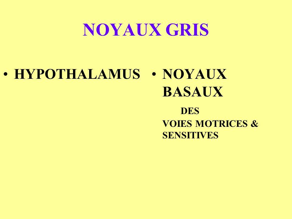 NOYAUX GRIS HYPOTHALAMUS NOYAUX BASAUX DES VOIES MOTRICES & SENSITIVES