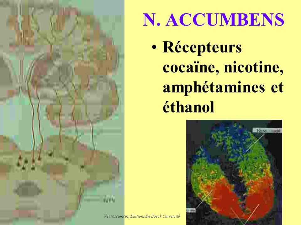 N. ACCUMBENS Récepteurs cocaïne, nicotine, amphétamines et éthanol