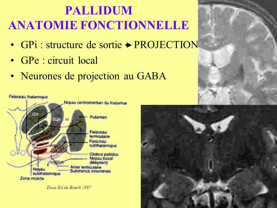 PALLIDUM ANATOMIE FONCTIONNELLE