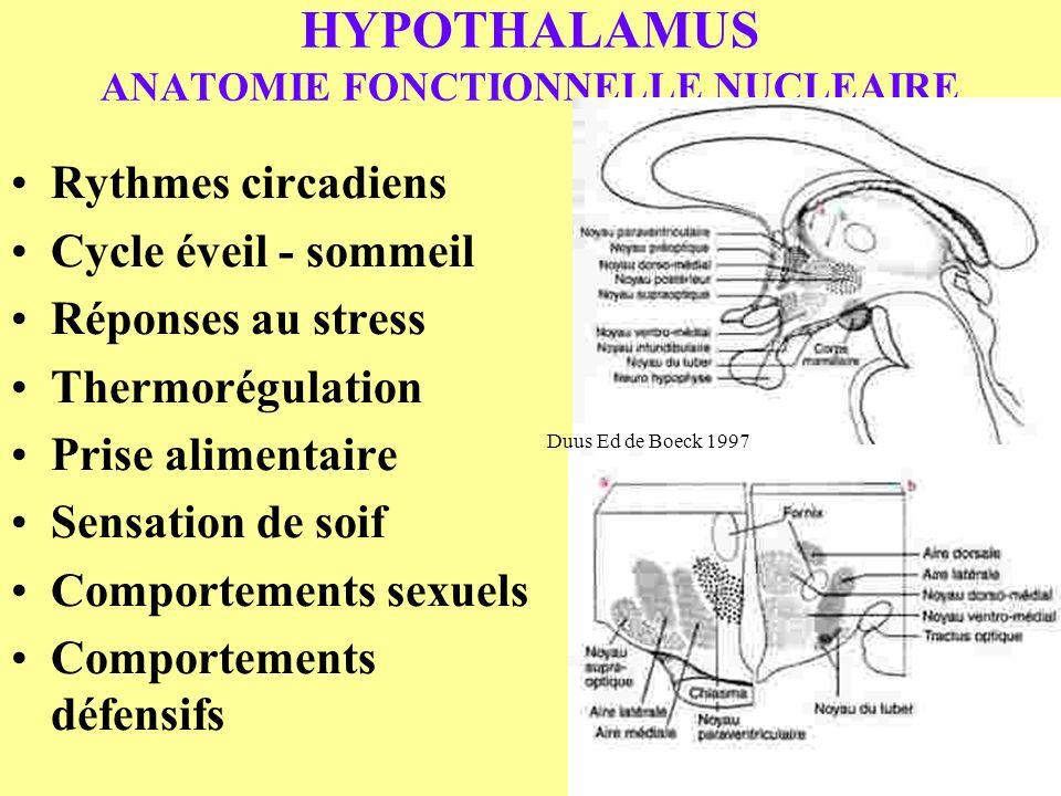 HYPOTHALAMUS ANATOMIE FONCTIONNELLE NUCLEAIRE