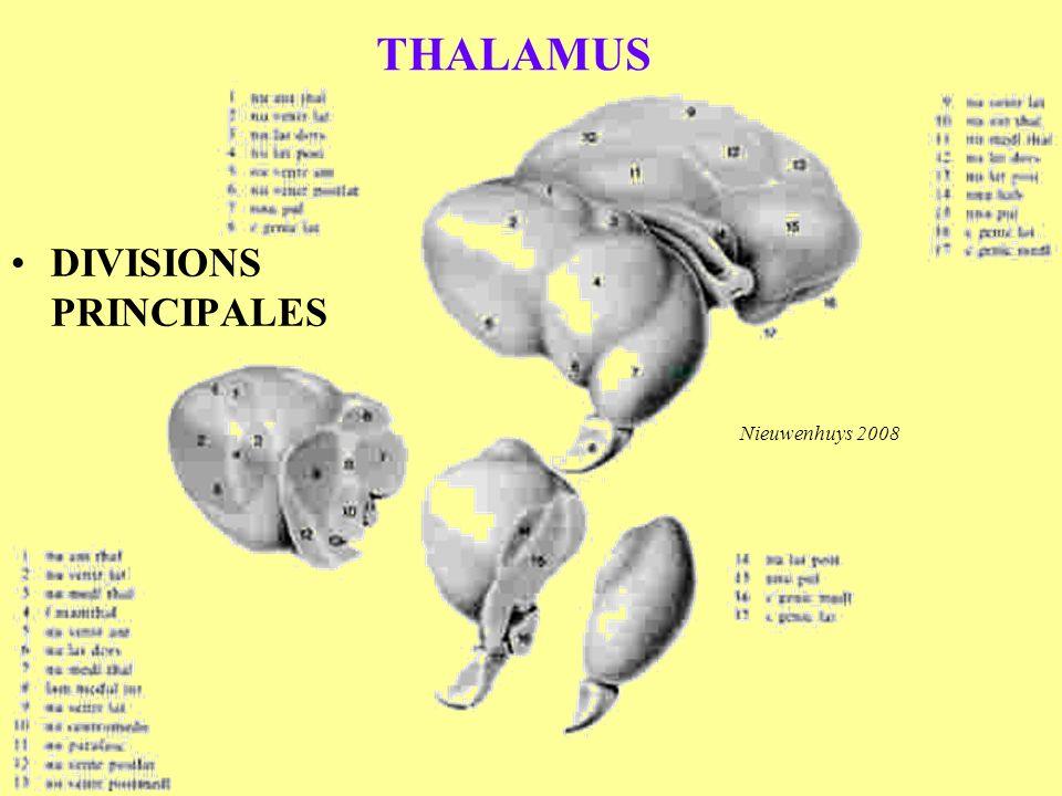 THALAMUS DIVISIONS PRINCIPALES Nieuwenhuys 2008