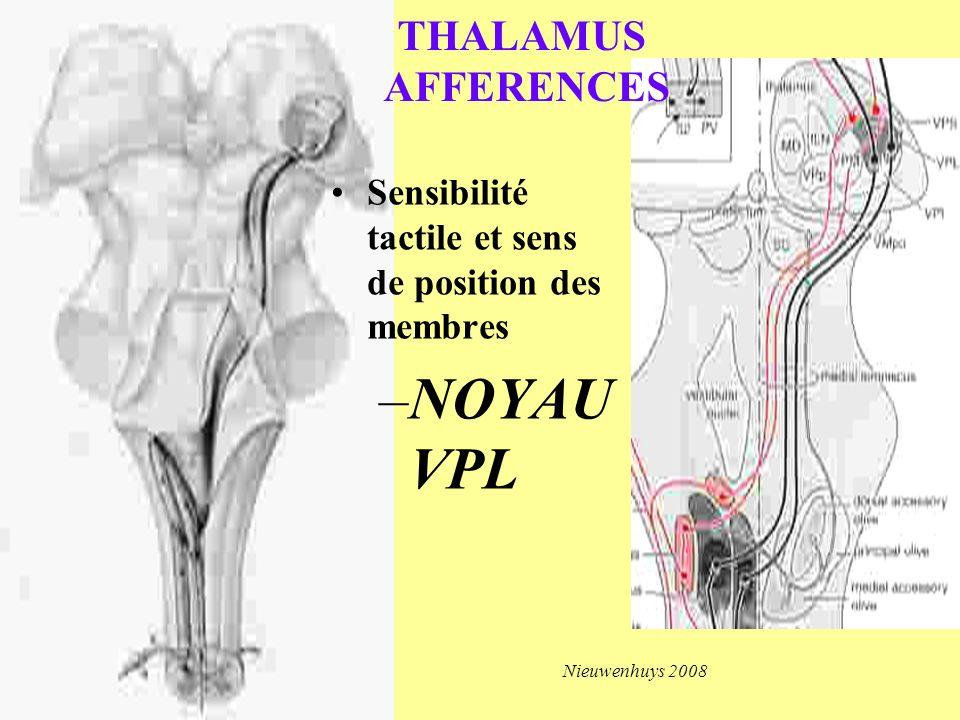 NOYAU VPL THALAMUS AFFERENCES